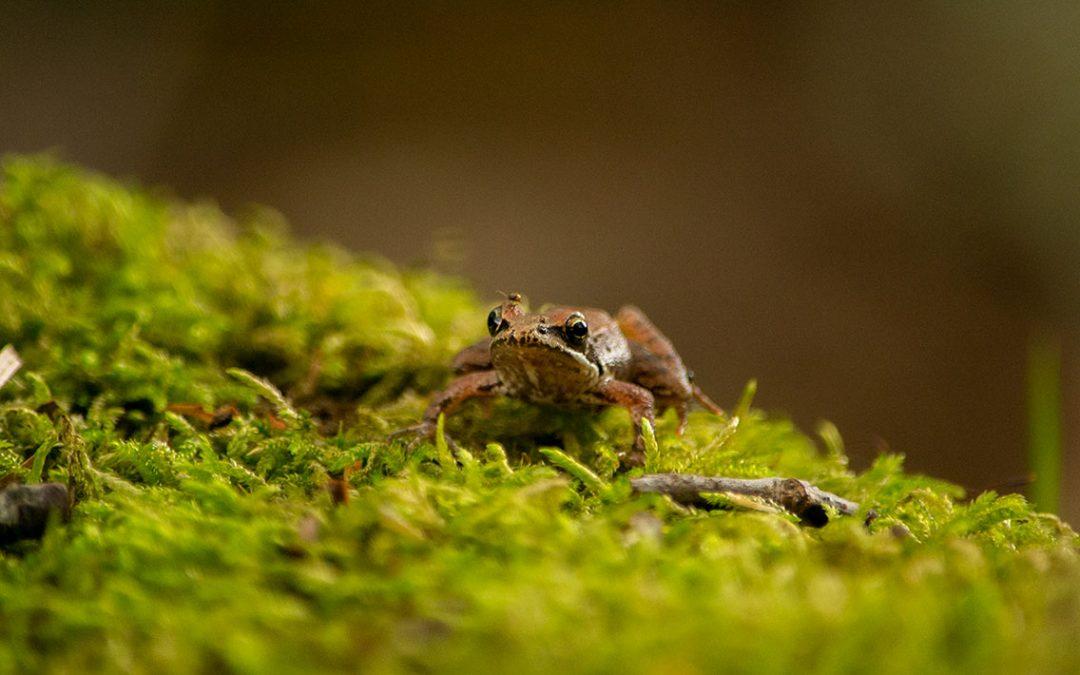 Biodiversity Park Update