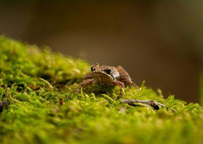 Biodiversity_15
