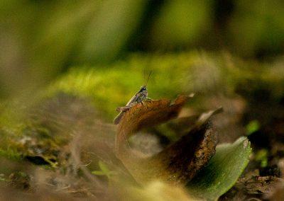 Biodiversity_5