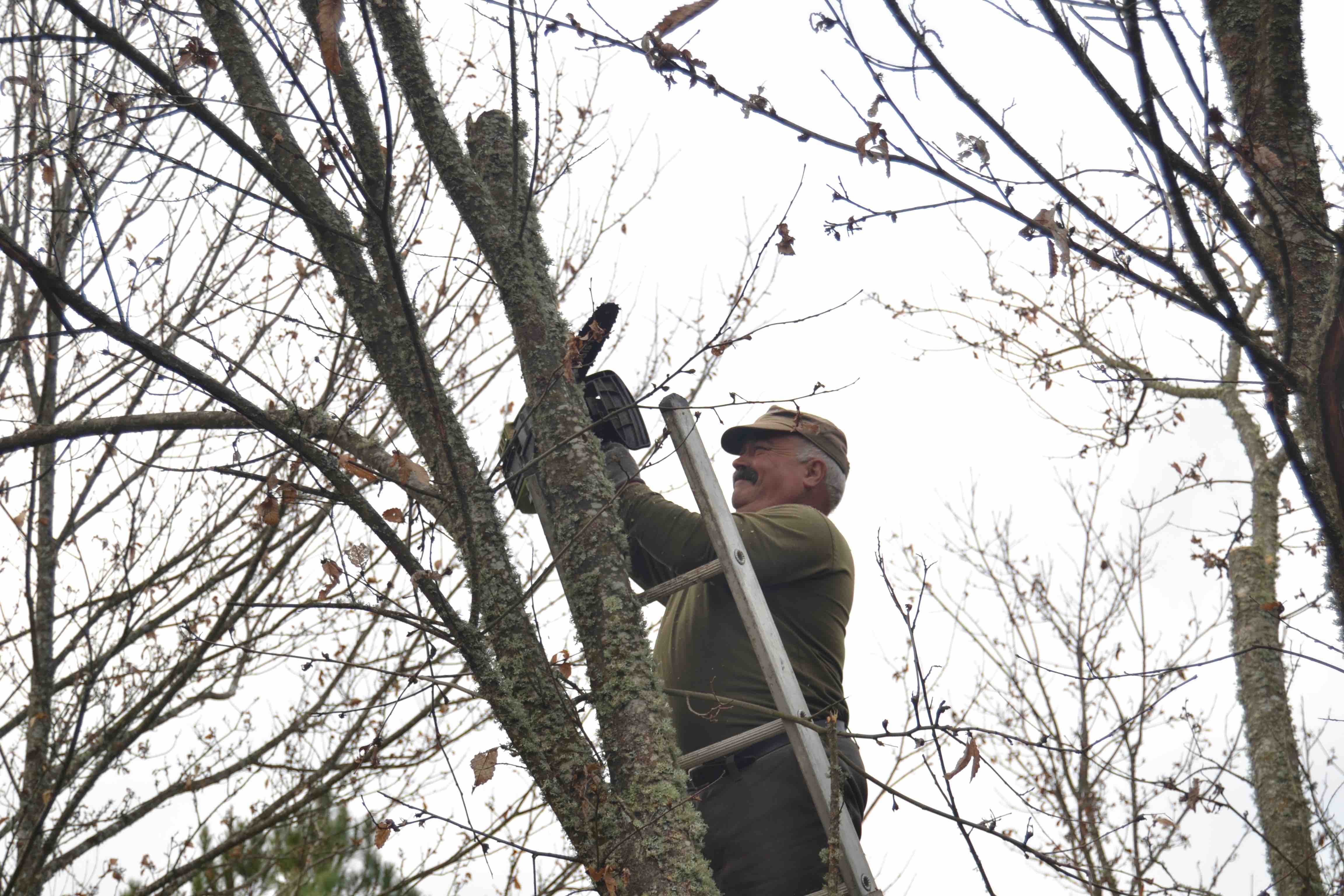 Pruning the chestnut forest